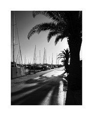 Valencia 87 (BLANCA GOMEZ) Tags: spain valencia bw blackwhite light shadows textures shapes silhouettes reflections sun heat palmtree palmera port puerto marina architecture arquitectura arquitectos barcos sea water boats