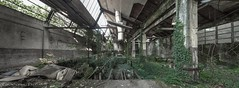 Jungle Fever (Graceful Decay) Tags: abandoned architecture building canon decay eos factory gracefuldecay green grey industry industrial ivy lost old panorama urbex verlassen
