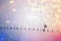 winter etude (Anna M.J.) Tags: winter snow bokeh tree canon60 austria tyrol travelphotography traveladdict color blue pink linie cold
