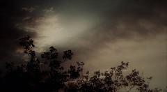 Coercive powers (pastadimama) Tags: art drama nature dark sky sunset trees clouds coercivepowers