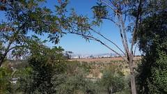 Ankara skyline from Bilkent University (Steve Hobson) Tags: bilkent university ankara trees