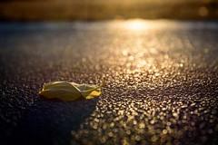 Golden Autumn Road (NathalieSt) Tags: europe france hérault lagrandemotte languedocroussillon occitanie leverdesoleil nature nikon nikond750 nikonpassion nikonphotography sunrise