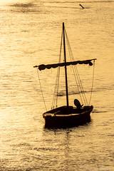 Golden hour (christian.grelard) Tags: orange boat loirevalley loire amboise sunset water river sun indreetloire shadow golden goldenhour gold