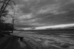 Early December at Petrie Island. (runningman1958) Tags: nikon d7200 nikond7200 petrieisland bw blackandwhite