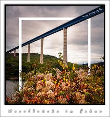 Moselbrücke im Fokus (MaRü Fotografie) Tags: gebirge architektur brücke gewässer himmel sphotoshopbearbeitungen berge blätter natur bäume hunsrück oktober mosel laub herbst bauwerk landschaft 2019
