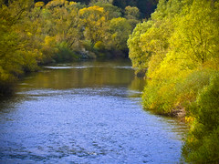 an der Eder (NPPhotographie) Tags: nature art creative oberberg npp eder river tree water autumn fall