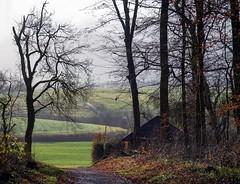 Spätherbst (to.wi) Tags: schwäbischealb eichert eichertwald göppingen stauferkreis towi landschaft gegenlicht dunst nebel herbst winter heiningen