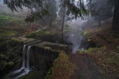 De nieblas y silencios... (T.I.T.A.) Tags: montealoia niebla bosque lago estanque tui parquenaturaldelmontealoia