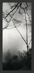 Not Japanese #10 (Mark Dries) Tags: markguitarphoto markdries foldingcamera dacora foma retropan mist fog clouds 6x6 nograinnoglory grainy pennabilli mediumformat darkroomprint ilford mgiv