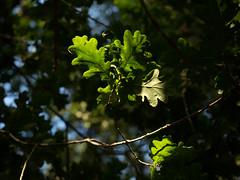 wareham-7030477 (E.........'s Diary) Tags: wareham dorset england woodland