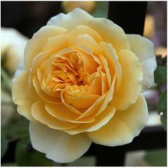 0002 (peter.tyrer) Tags: devon flower bloom nature