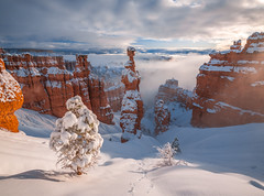 Snowy Hoodoos Clearing Winter Storm! Bryce Canyon National Park Winter Snow Fuji GFX100 Fine Art Landscape Nature Photography! Bryce Canyon NP Utah Winter Scenery! McGucken dx4/dt=ic Medium Format!  Fujifilm Fujinon GF 23mm F/4 R Lm Wr Lens Wide Angle! (45SURF Hero's Odyssey Mythology Landscapes & Godde) Tags: snowy hoodoos clearing winter storm bryce canyon national park snow fuji gfx100 fine art landscape nature photography np utah scenery mcgucken dx4dtic medium format fujifilm fujinon gf 23mm f4 r lm wr lens wide angle