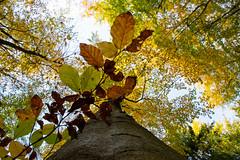 Herbst im Sauerland (_dankhn) Tags: sauerland herbst autumn nrw deutschland germany landschaft landscape countryside fall