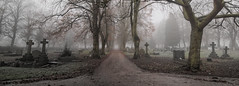 The Final Road (Neil_Hodgson) Tags: cemetery graveyard fog foggy autumn autumnal atmospheric death end road final burial graves