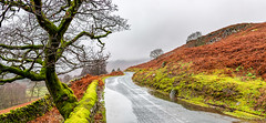 10th December 2019 (Rob Sutherland) Tags: duddon dunnerdale valley tree gnarled wall drystone road lane track farm country countryside rural landscape panorama panoramic wet rain storm winter december scenic puddle bracken hill fell upland lakes lakeland lakedistrict nationalpark ldnp ulpha cumbria cumbrian england english uk britain british