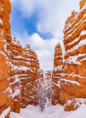 Snowy Navajo Loop - Bryce Canyon, 2019 (Dino Sokocevic) Tags: bryce snow brycecanyon snowy snowstorm winter utah utahphotographers bluesky landscape landscapes nikon nikonusa nationalpark nationalparkservice usa west tamron tamronusa