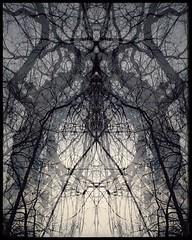 Tribal (r0llsky) Tags: awardtree trees forest rheinforest organic organicdream