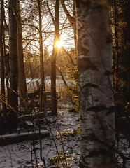 shine (A.Koponen) Tags: canon eosr rf24105mmf40 hoya lseries winter nature naturephotography moments luonto sunset trees forest lake ice snow sun sky