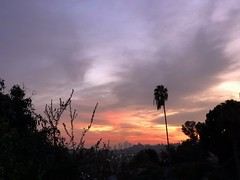 fullsizeoutput_a210 (lnewman333) Tags: highlandpark losangeles nela socal southerncalifornia usa ca sunset northeastlosangeles dtla downtownlosangeles palmtree evening colorful sky