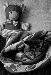 Of Bear and Cat (timmerschester) Tags: bear toy stripes tabby space cat feline cabin michigan patterns caseville monochrome digital nikond3500 chair blanket blackandwhite spalding leelu
