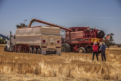 Harvest discussion (Bev-lyn) Tags: harvest wheat wimmera grain machinery australia outdoors fields