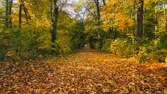 Bunte Herbstfarben (KaAuenwasser) Tags: fasanengarten garten park wald weg herbst herbstlich licht schatten stimmung bunt farben farbe blatt blätter laub herbstzeit jahreszeit baum bäume natur herbstfarben