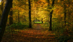 Licht und Schatten im Wald (KaAuenwasser) Tags: wald waldweg fasanengarten park garten ort stelle platz licht schatten herbst farben farbe bunt laub blatt blätter hainbuchen jahreszeit