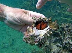 GOPR1031 (xd_travel) Tags: 2014 galapagos mssamba underwater uw snorkeling