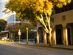 Raining Leaves (lmurphy) Tags: mountainview potd