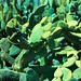desert gardens (xpro). san marino, ca. 2018.