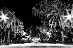 ParqueZafra (PHOTOJMart) Tags: jmart fuente del maestre zafra parque la paz españa spain espanha park peace city ciudad noche night naturaleza palmeras canon 77d