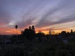IMG_6179 (lnewman333) Tags: highlandpark losangeles nela socal southerncalifornia usa ca sunset northeastlosangeles dtla downtownlosangeles palmtree evening colorful sky cyprustree cyprus