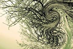 Branch / Faág (Ibolya Mester) Tags: hungary magyarország natur nature outdoor creative artistic branch canon canoneos600d creation effect
