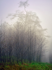 Fog on the path (Sony J Thomas) Tags: fog nature woods trees forest pacificnorthwest pnw washington winter