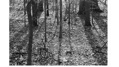 Shadows (philslattery87410) Tags: shadows trees winter woods forest