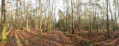 Old Roman street to Kastell Stockstadt Main (Artist Shaman) Tags: history way place tree forest time autumn wide panorma
