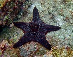 P4060071 (xd_travel) Tags: 2014 galapagos mssamba underwater uw snorkeling