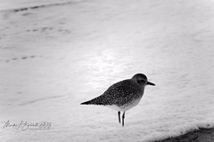 Just Wading (drbabbitt) Tags: beach ocean water snow clouds