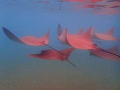 P4060114 (xd_travel) Tags: 2014 galapagos mssamba underwater uw snorkeling