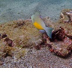 P4060008 (xd_travel) Tags: 2014 galapagos mssamba underwater uw snorkeling