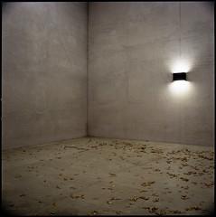 Ecke (Konrad Winkler) Tags: berlin regierungsviertel schweizerbotschaft architektur licht laub beton langzeitbelichtung kodakportra160 mittelformat 6x6 hasselblad503cx carlzeissdistagon3560t epsonv800