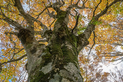 氷ノ山61・Mt.Hyonosen (anglo10) Tags: 養父市 兵庫県 japan 氷ノ山 山 但馬 mountain 紅葉 autumnleaves 森林 forest
