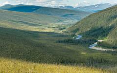 Preacher Creek (BLM Alaska) Tags: alaska blm preachercreek steesenca summer unitedstates forest taiga spruce
