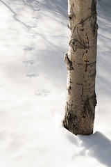 Snow Tracks (jdmancuso) Tags: landscape wildlife snow winter forest reno nevada tracks