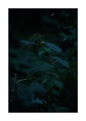 This work is 8/18 works taken on 2019/11/02 (shin ikegami) Tags: sony ilce7m2 a7ii sonycamera 50mm lomography lomoartlens newjupiter3 tokyo 単焦点 iso800 ndfilter light shadow 自然 nature naturephotography 玉ボケ bokeh depthoffield art artphotography japan earth asia portrait portraitphotography