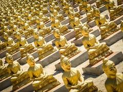 Buddha's (ainz1607) Tags: statues statue buddha buddhism buddhist temple shrine pagoda olympus tg5 tg6 yellow religion asia cambodia