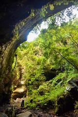 Cave (PLawston) Tags: la palma canary islands spain los tilos laurisilva laurel forest cave