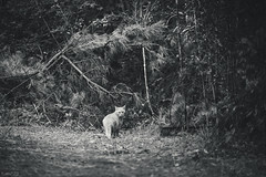 猫 (fumi*23) Tags: ilce7rm3 sony sel85f18 85mm fe85mmf18 feline emount a7r3 animal cat chat gato neko ねこ 猫 ソニー モノクロ bw bnw blackandwhite monochrome