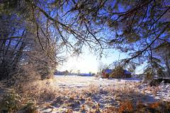 December landscape (annemwo) Tags: forest trees snow december winter landscape sky barn tønsberg norway
