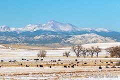 December 1, 2019 - Home where the buffalo roam. (Patrick Martin)